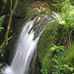 Wasserfällchen bei Edelfreuengrab