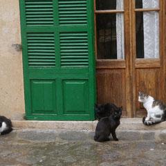 Die Katzen von Deià