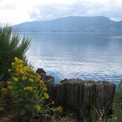 Der Cowichan Lake