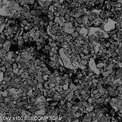 走査顕微鏡写真 1000um=1mm