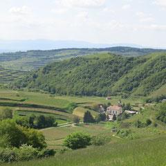 Blick auf Alt-Vogtsburg.