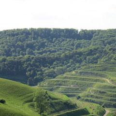 Die Umgebung von Vogtsburg