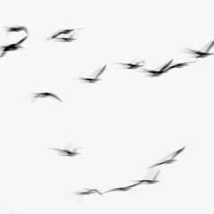 Graugans / Greylag goose || © Till Macher