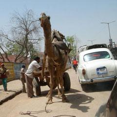 Strassenszene in Rajasthan