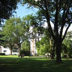 Esche,Linde und Götterbaum im Hintergrund 7. Juli 2007
