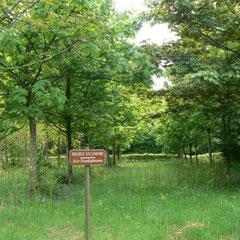 Forêt d'Andaine (Orne) : l'arboretum