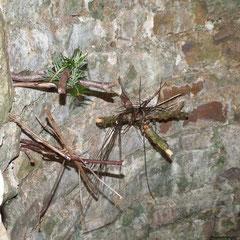 Forêt d'Andaine : les croix dans le puits de la Chapelle Saint-Antoine