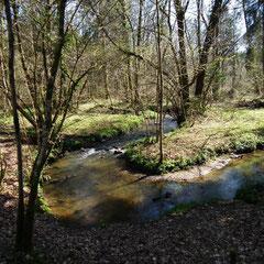 La rivière la Gourbe