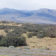 Torres del Paine: In diesem Bild verstecken sich Ñandus, straußähnliche Vögel