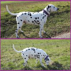 Hier trägt Gretchen das gleichnamige Modell in den Farben Purple, Luxor, Lavender und Fuchsia mit schönen Perlen und Charms
