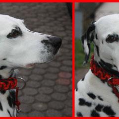 "Hier trägt Chiara Modell ""Wave"" in den Farben Black, Imperial Red, Imperial Red Diamond und Scarlet Red"