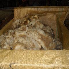 Laine de brebis récupérée pour la vente