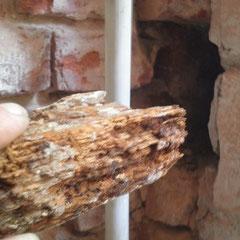 Verbautes Wandlager mit Pilzbefall
