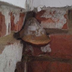 Pilzbefall am Mauerwerk nach Bautrocknung