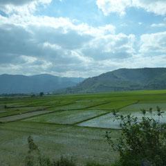 Reisfelder in der Tiefebene bei Nha Trang