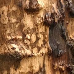 Stammbohle Detail der lebendigen Oberfläche mit Hell/Dunkel-Färbung