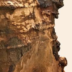Stammbohle Detail der unregelmäßigen Baumkante