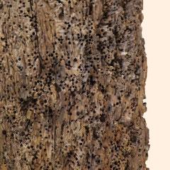 Detailansicht der Korrosion durch Muscheln und Wurmbefall