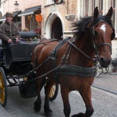 Während die Pferde lostraben, gönnen wir uns einen Café au lait auf einer der Terrassen am großen Markt. Bei der Kulisse schmeckt es doppelt gut und schlägt sich auch entsprechend im Preis nieder.