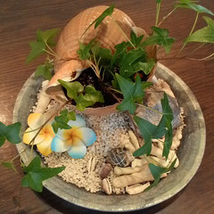 貝の植木鉢 上