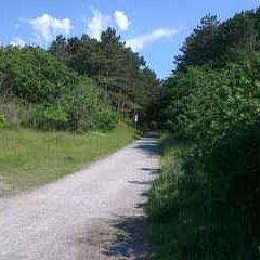 Wanderweg in der Heide