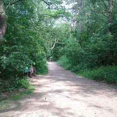 Wanderweg im Wernerwald