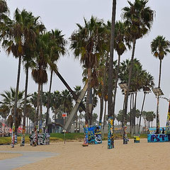 Palmen in Venice Beach