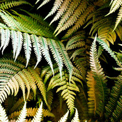 fern_yellow