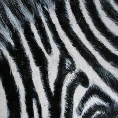 Zebra 6/6, 32,5x32,5cm, Acryl auf Holz, 2013