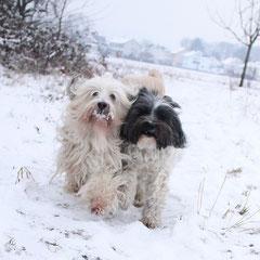 Caruo und Lulu