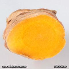 Curcuma (Curcuma longa), Wurzel Querschnitt