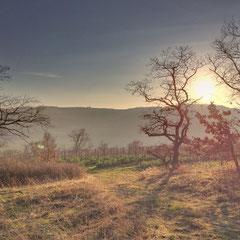 kleiner Eichenwald, Siefersheim