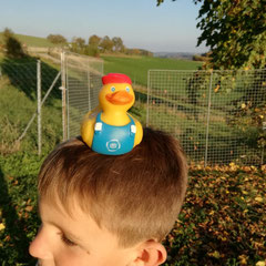 Ivos Ente in Östereich auf dem Rückweg von Kroatien.