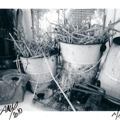 """Série : """"Sur le rebord de ma fenêtre"""", 03_printemps_2010 _ © Annick Maroussy 1/1"""
