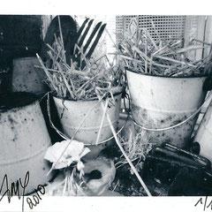 """Série : """"Sur le rebord de ma fenêtre"""", 02_printemps_2010 _ © Annick Maroussy 1/1"""