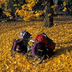 """Etats-Unis. Une """"petite reine"""" sur un lit de feuilles d'or"""