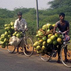 Inde.Vélos coco