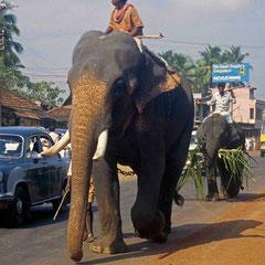 Inde. Kérala. Attention un éléphant peut en cacher un autre!