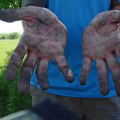 Bulgarie: les mains dans le cambouis