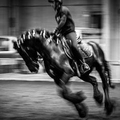 932.542 Fiera Cavalli Verona © 2019 Alessandro Tintori