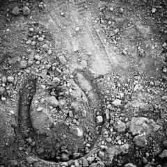 932.210 Fiera Cavalli Verona © 2019 Alessandro Tintori