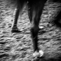 932.307 Fiera Cavalli Verona © 2019 Alessandro Tintori