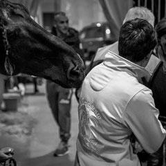 932.311 Fiera Cavalli Verona © 2019 Alessandro Tintori