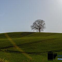 Baum auf Hügel in SH © Foto: Holger Hütte 2014