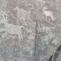♡ 古代にインディアンホホカム族が書いたと云われるペトログリフ。ホホバ(純粋種Sayuri原種ホホバ)栽培地ハクアハラバレーの聖なるイーグルテールマウンテンの麓の石に描かれています。 (スミスさん撮影)