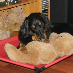 Cayuga und ihr Teddy