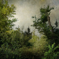 """<span style=""""font-family: Ubuntu Condensed; letter-spacing:0.3em;"""">NOTES FROM THE FOREST DIARY -<br />DAY TWELVE</span> </p>"""