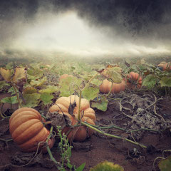 "<span style=""font-family: Ubuntu Condensed; letter-spacing:0.3em;"">NEWS FROM PLANET PUMPKIN</span> </p>"
