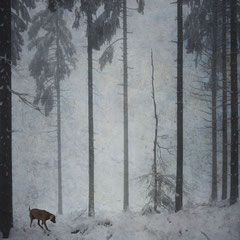 """<span style=""""font-family: Ubuntu Condensed; letter-spacing:0.3em;"""">DOG, FOG AND SNOW</span><br>"""