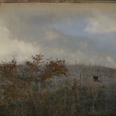 "<span style=""font-family: Ubuntu Condensed; letter-spacing:0.3em;"">LANDSCAPE WITH CAT</span>"